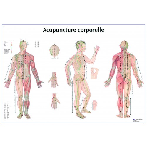 Acupuncture point wall chart (English)