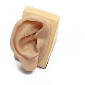 Silicone Ear Model for Acupuncture (right ear)